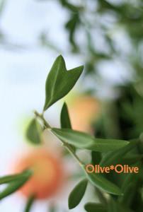 S036_olive